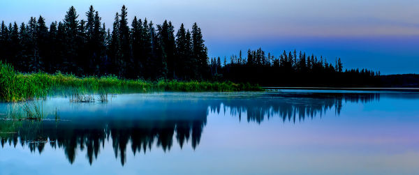 misty_reeds