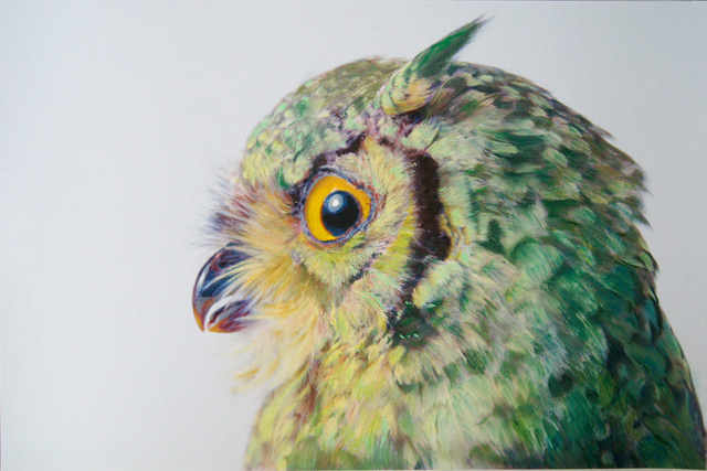 The Colorful Photorealistic Owls of John Pusateri