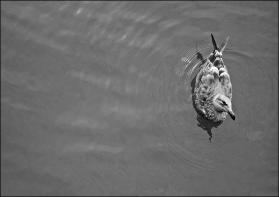 minimalist-photography-by-cedrik-ferrer-