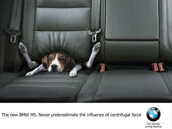 14. dog advertising