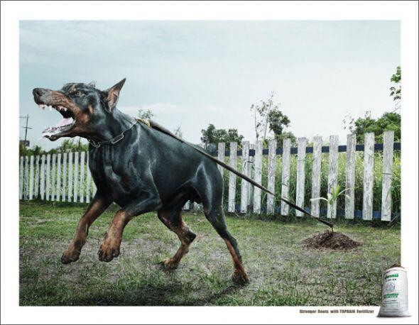16. dog advertising