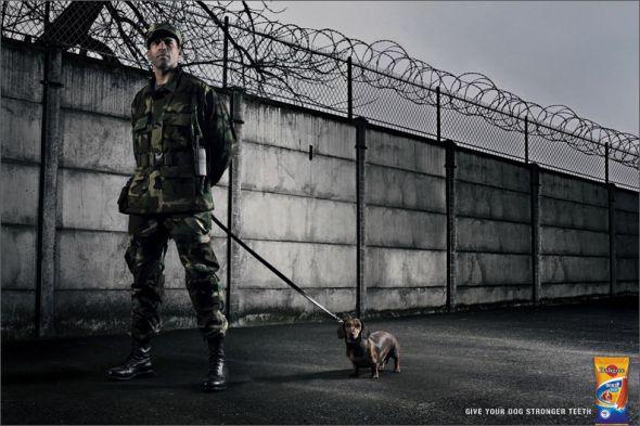 17. dog advertising