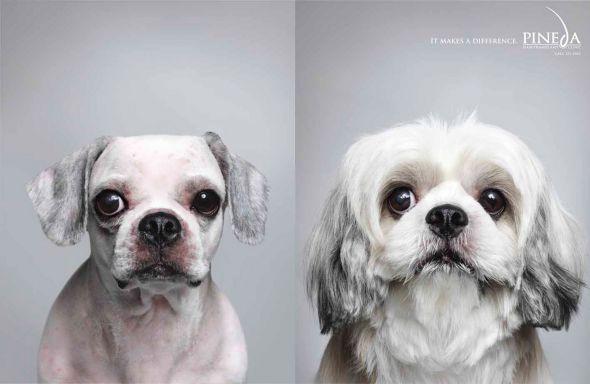 28. dog advertising