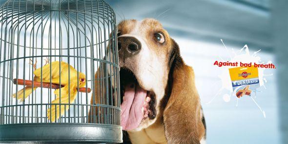 29. dog advertising