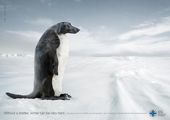 5. dog advertising