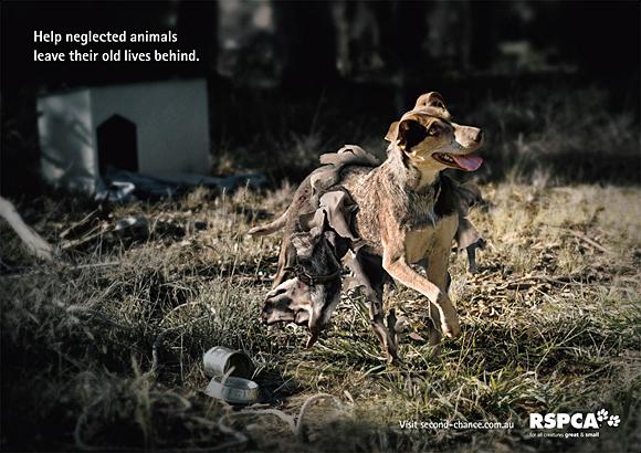 7. dog advertising