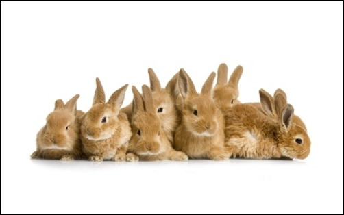 Easter-Bunnies-easter-wallpaper