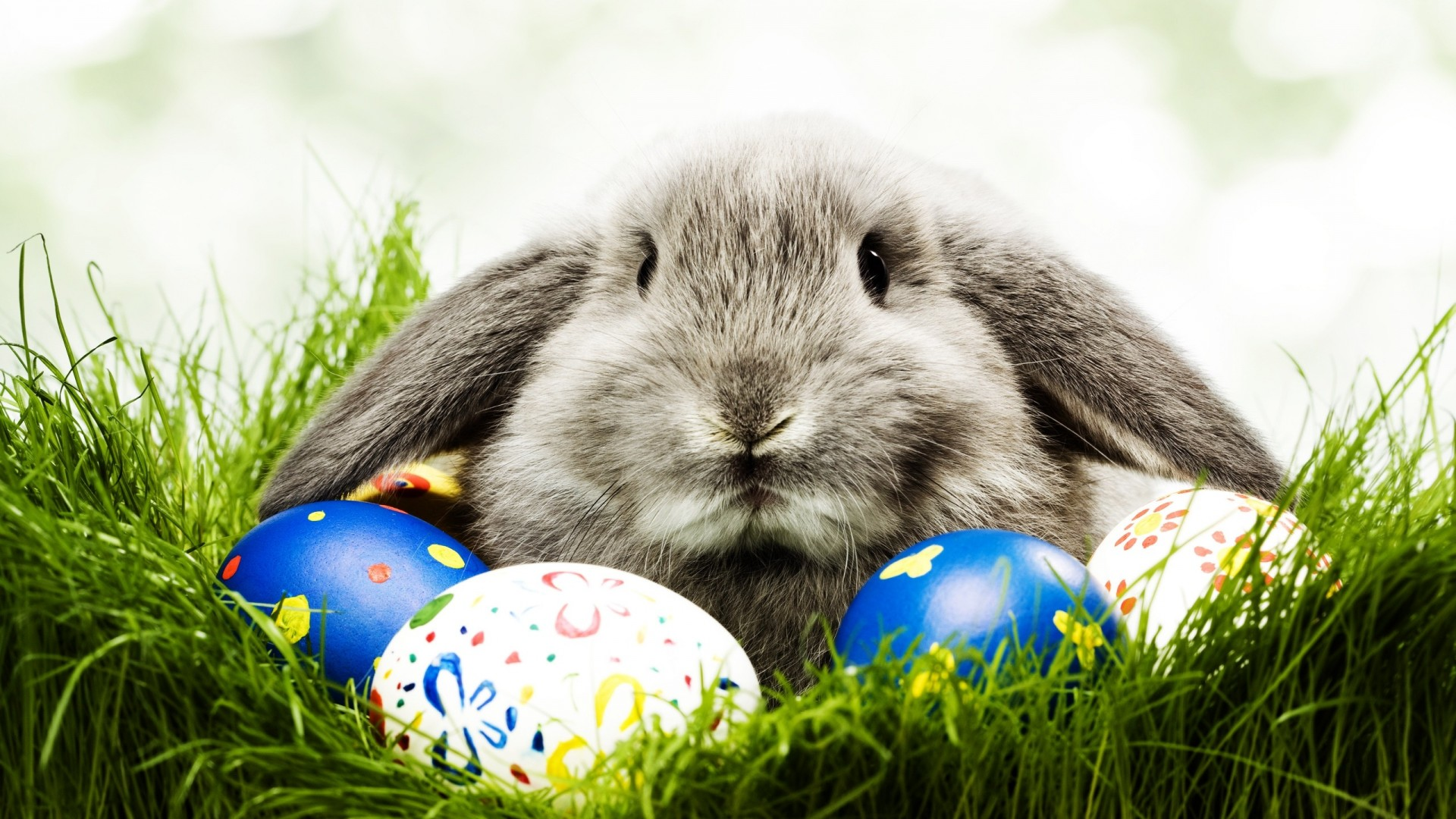Easter-Bunny-easter-wallpaper