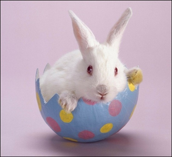 bunnies-eggs