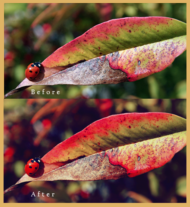 Photoshop Action Colors
