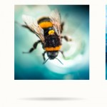 CSS 3D Image Flip Gallery With Dynamic Shadows