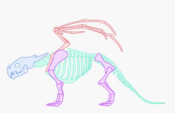 dragonbody_1-2_skeleton_variations
