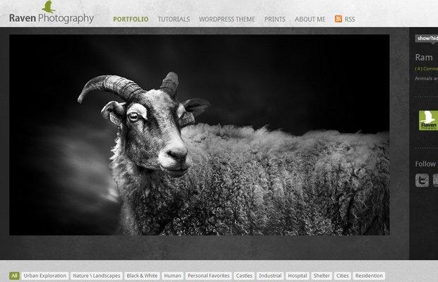 website photography portfolio layout design