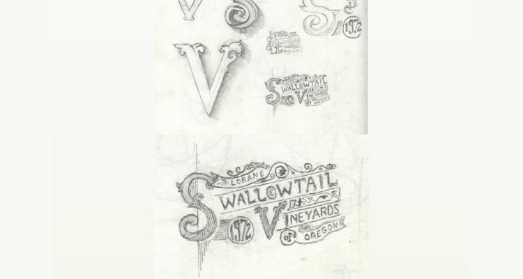 Swallowtail Vineyards Logo logo design sketch process branding