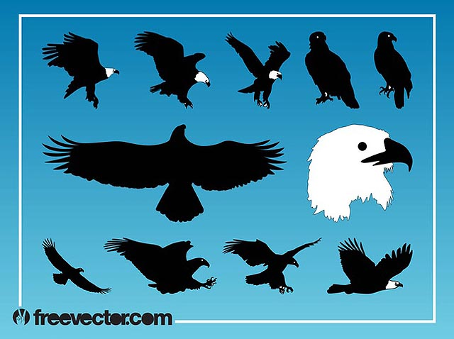Eagles Vector Graphics for Memorial Day fresh best free vector packs kits