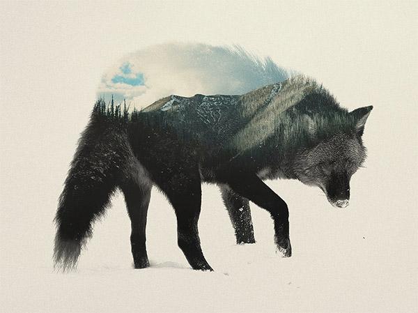 Double exposure animals by Andreas Lie