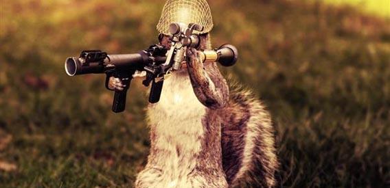 Army Squirrel Photo Manipulation