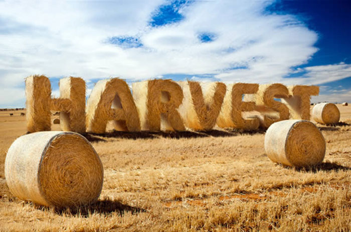 Create Stylized Hay Bale Typography in Photoshop