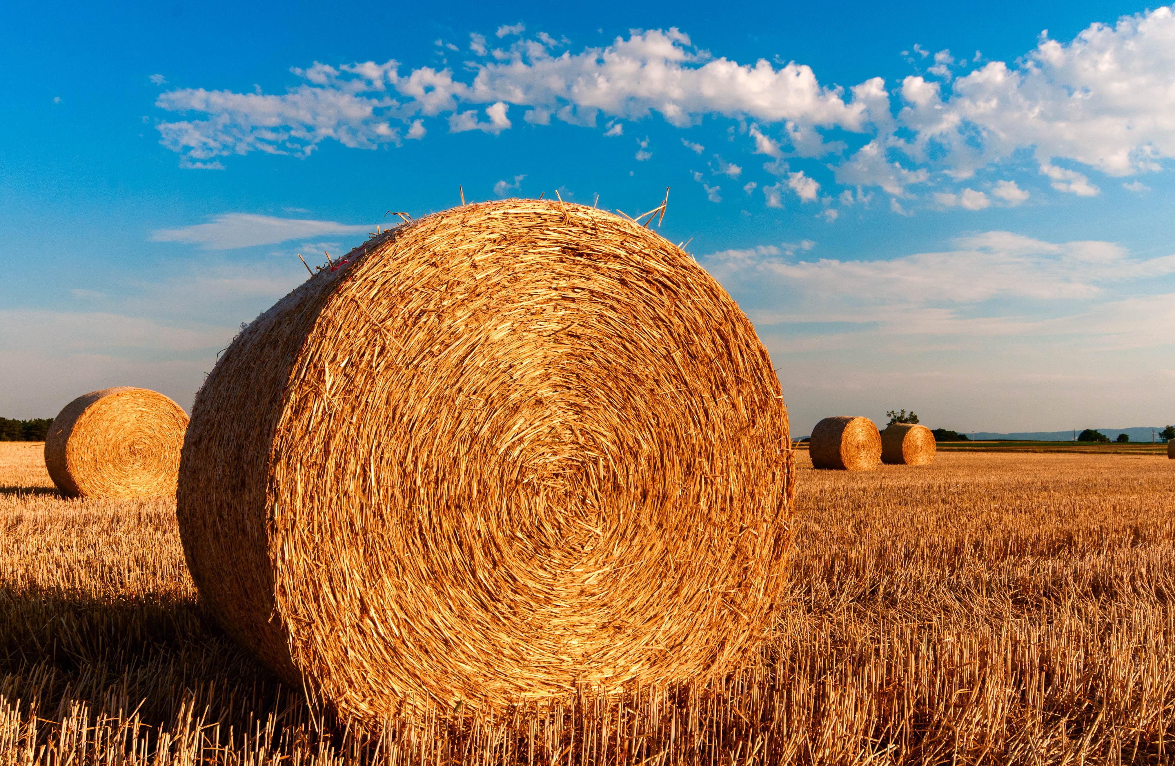 summer stock photos hay bales