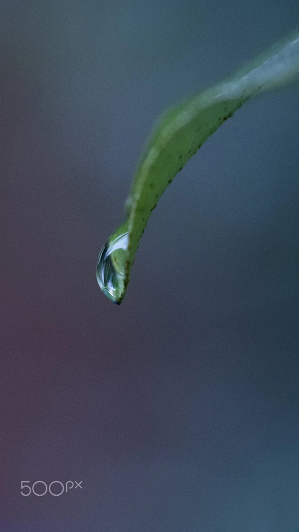 Beautiful Examples Of Water Drop Photography - 17