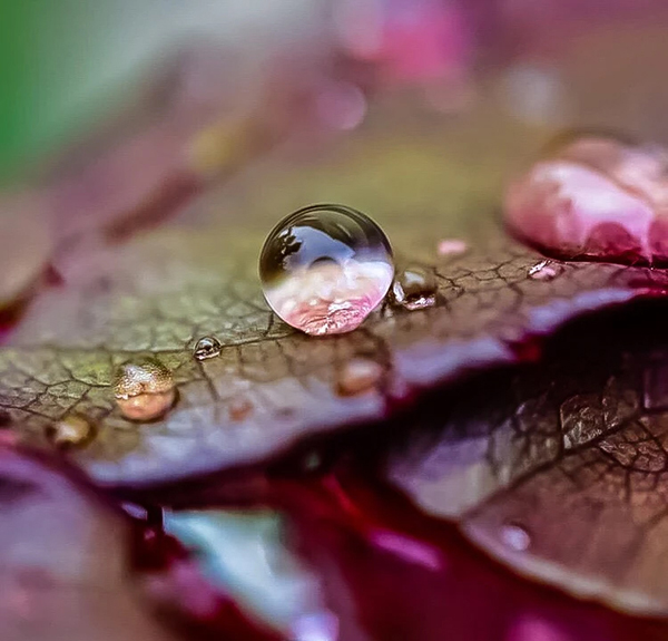 Beautiful Examples Of Water Drop Photography - 34