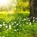 25 Free Spring Web Design Templates