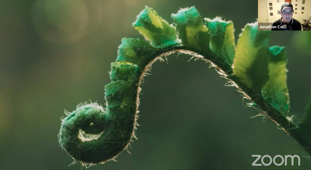 Nature growth — a fern plant