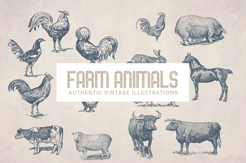 Vintage Animals Illustrations