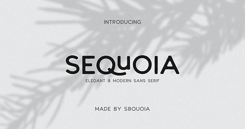 Sequoia Modern Elegant Fonts