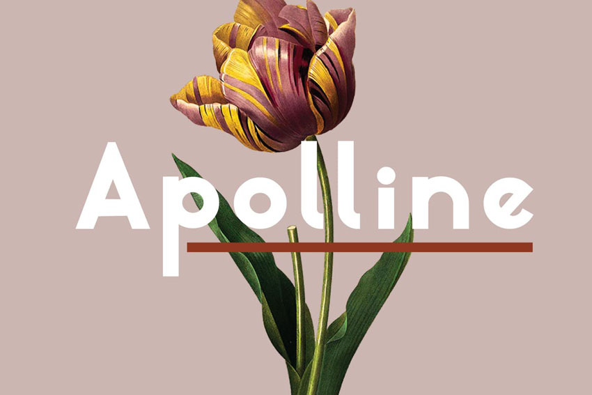 Apolline Elegant Humanist Sans Serif