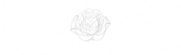 Rose Illustration Tutorial add rose petals step by step