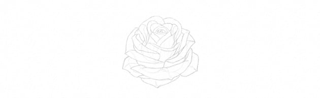 How to Draw a Rose With Pencil Tutorial rose petals