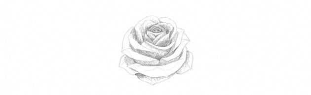 How to Draw a Rose With Pencil Tutorial shading rose