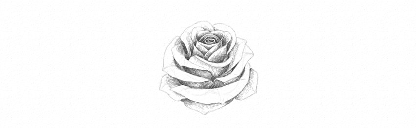 How to Draw a Rose With Pencil Tutorial shade rose