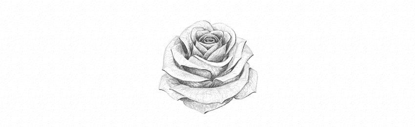 How to Draw a Simple Rose Tutorial shade a white rose