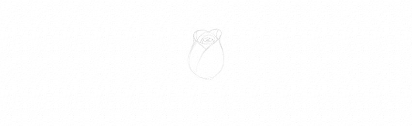 How to Draw a Rose Step by Step Tutorial rose sketching flower outline drawing