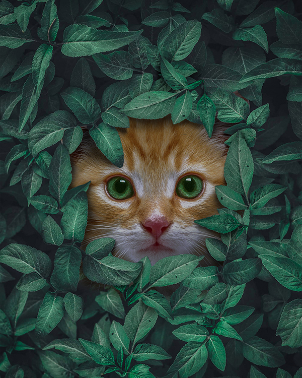 How to Create Cat Behind the Leaves in Photoshop Tutorial