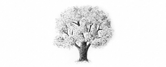 How to Draw Trees Tutorial realistic oak tree leaves drawing with pencils
