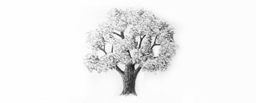 How to Draw Trees Tutorial shade realistic oak tree crown drawing