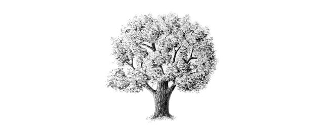 How to Draw Trees Tutorial realistic oak tree drawing with pencils