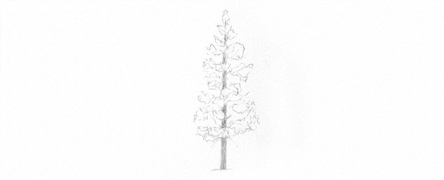 How to Draw Trees Tutorial shade pine tree trunk drawing