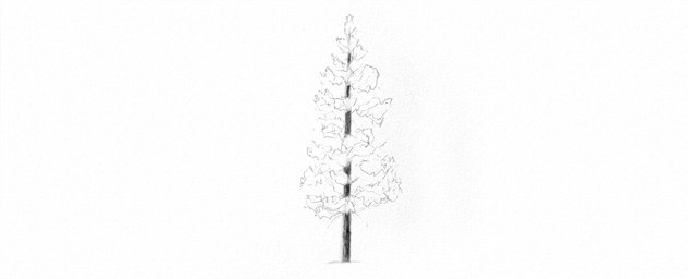 How to Draw Trees Tutorial shade pine tree trunk drawing with pencils