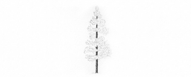 How to Draw Trees Tutorial pine tree needles drawing
