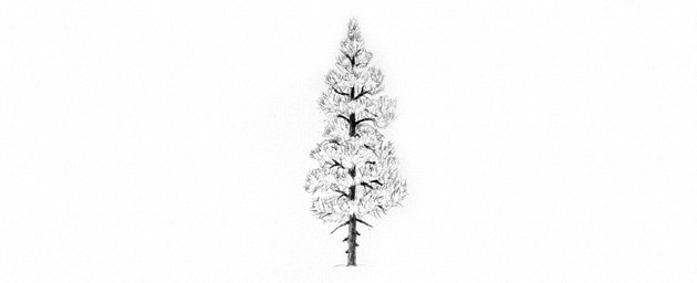 How to Draw Trees Tutorial pine tree drawing details