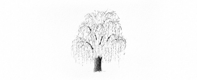 How to Draw a Tree Easy Tutorial weeping willow tree trunk drawing