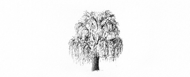How to Draw a Tree Easy Tutorial shade weeping willow tree leaves drawing