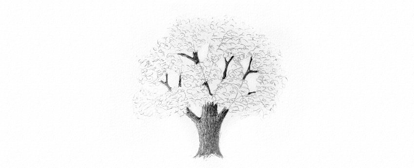 How to Draw Trees Tutorial realistic oak tree leaves drawing