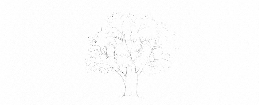 How to Draw Trees Tutorial oak tree leaves drawing