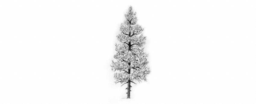 How to Draw Trees Tutorial evergreen pine tree needle drawing the texture