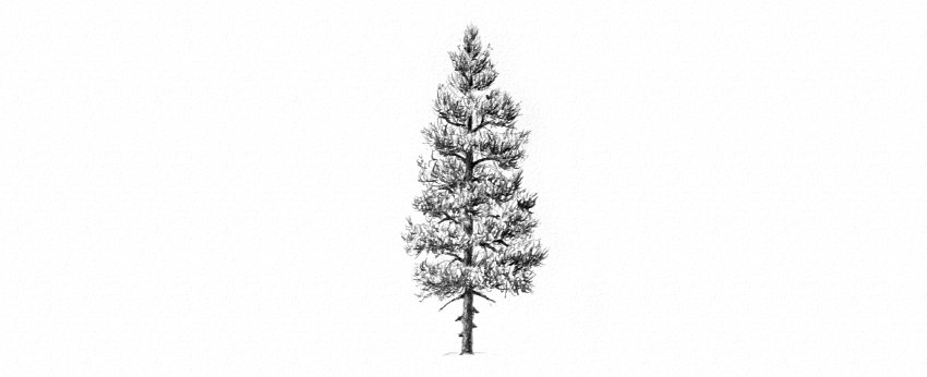 How to Draw Trees Tutorial shade needles of pine tree drawing